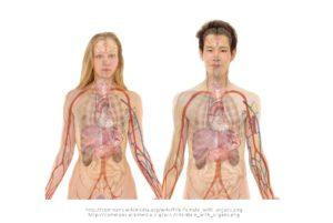 frau , mensch , paar , mann , gesicht , körper , lippen , mund , haut , anatomie , knochen , gehirn , schädel , augen , kopf , organe , schema , herz , nieren , leber , lunge , magen , biologie , lehre , menschen , wissenschaft , medizin , abbildung , krankenpflege, rumpf, oberkörper