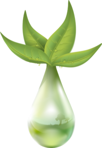 extraktion, pflanze, flüssigkeit, tropfen von wasser, blatt, green, natur dilution, trituration, homöopathische Urtinktur Tinktur Heilpflanzen, homöopathie heilkräuter