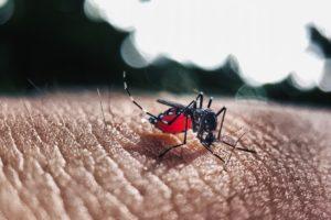 Dengue Fieber, Dengue-Fieber, Mücke, Mückenstich, Insekt, Blut, Blutsauger