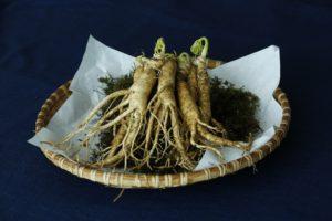 ginseng heilkräuter heilpflanzen alternative medizin hausmittel