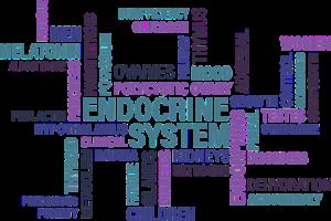 schilddrüse , endokrin , diabetes , drüse , syndrom , krankheit , krebs , müdigkeit , ovarien , eierstock , thymus , hirnanhangsdrüse , nebennieren , bauchspeicheldrüse , Endokrines System, Endokrine Syndrome