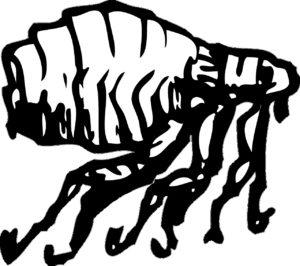flohmarkt , käfer , insekt , sprung , schädlingsbekämpfung , juckreiz , parasit , biss , insekten , pestizid , eier , prävention , desinfizieren , befall , verteidigung , insekt , hunde , katzen , behandlung , floh-shampoo , flügellose , blutsauger , larven , insektenschutz , gischt , pestizide , einmarsch , kammerjäger , saugen , extern , springen