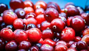 lebensmittel , beere , cranberry , ripe , rot , round , juicy , frisch , marsh , raw , wald , natürliche , gesund, superfood