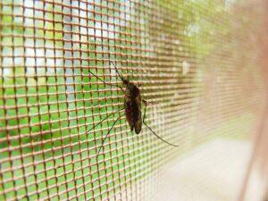 moskito , käfer , insekt , insekt , schädlingsbekämpfung , krankheit , malaria , blut , flügel , biologie , parasitäre , infektiöse , schmerz , saugen , virus , fütterung , sauger , fieber , blutsauger , pest , ausbruch , insectiside, fliegengitter, insektennetz