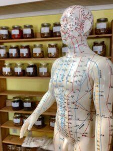 akupunktur , kräuter , alternative , homöopathie , chinesisch , wellness , behandlung, heilkräuter, pflanzen, tcm, meridian
