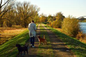 spaziergang , mensch , person , frau , hunde , landschaft , natur , weg , hunde ausführen , gassi gehen , laufen , spazieren , ausruhen , ruhe , idylle , freizeit , herbst