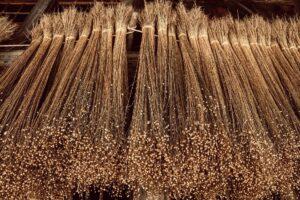 flachs , pflanze , trocknen , handwerk , altes handwerk , spinnen , weben , leinen , stoffe , aufhängen , historisch , alt , flachskapseln , samenkapseln , leinöl , leinsamen , superfood