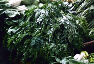 Moringa Blätter , Moringa , Moringa oleifera , Superfood , gesund , baum , Öl , Gemüse ,