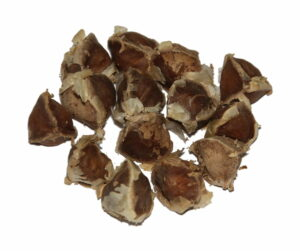 Moringa Samen , Moringa , Moringa oleifera , Superfood , gesund , baum , Öl , Gemüse ,