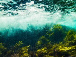 smaragd , wasser , meer , ozean , unterwasser , seestück , grün , algen , , spirulina , sauerstoff , umwelt  , meer , spirulina