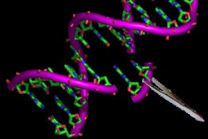 Gentherapie, DNA, Genom, Chromosome, Genome editing, CRISPR Cas9, Genschere
