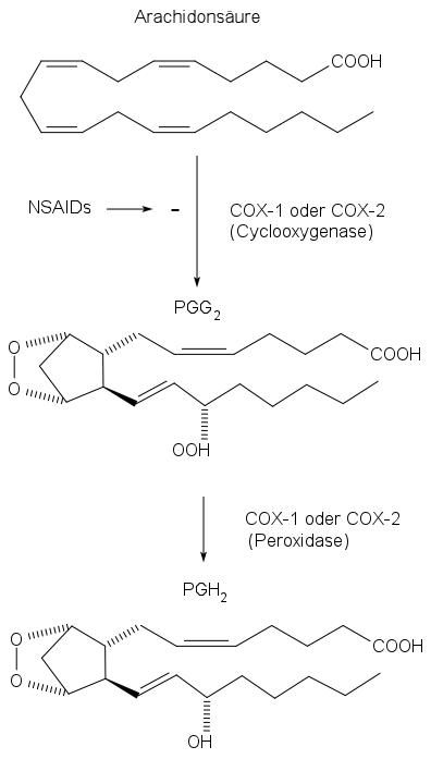 Cyclooxygenase (COX), COX-Hemmer, Arachidonsäure, Prostaglandin