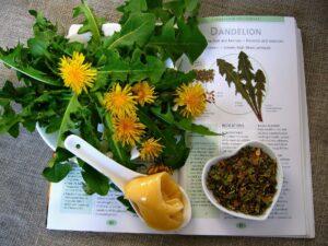 löwenzahn , pflanzliche heilmittel , gesundheit kräuterkunde , wellness , pflanze , behandlung , natur , kräuter , tee , medizin , gesund , abhilfe , heilung , gesundheit ,, heilpflanzen, heilkräuter, naturheilkunde, phytotherapie
