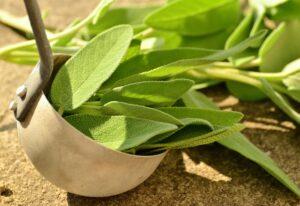 salbei , kräuter , küchenkräuter , gesund , teekräuter , gesundheit , kräuter-pflanzen , gartenpflanze , heilung , heilkräuter , küchengewürz , aroma , küchensalbei , gartengewürzpflanze , echter salbei , grün , kräuterpflanze , blätter ,