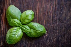 basilikum, heilpflanze, heilkräuter, naturheilkunde, phytotherapie, Ocimum basilicum