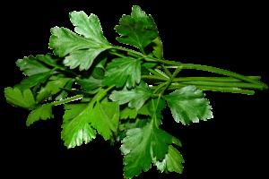 Petersilie, Blattpetersilie, Wurzelpetersilie, Küche, kochen, Gewürz, Heilplfanze, Heilkraut, Naturheilkunde