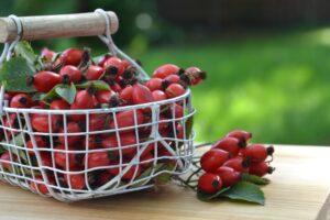 hagebutte , beere , pflanze , rot , frucht , natur , heilpflanze, heilkräuter, hundsrose, rose, vitamin c, , strauch , rosengewächs , gesund , früchte