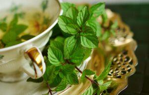 pfefferminze , heilpflanze , heilkräuter , minze , teekräuter , duftkraut , aroma , pfefferminztee , kräuter-pflanzen , küchenkraut , gesund , geschmack , kräuter , grüne minze , getränk , teekanne , gesundheit , erfrischend , tee , blätter , heilung ,