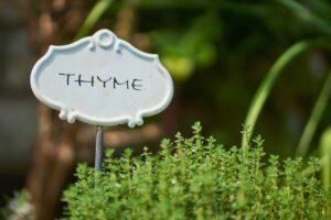 thymian , kräuter , gewürz , küchengewürz , pflanze , kräuterpflanze , küchenkraut , schild , grün , gartenpflanze , garten ,