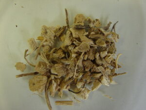 Stechende Mäusedorn (Ruscus aculeatus), Stacheliger, Dornmyrte, Heilpflanze, Wurzel, Extrakt