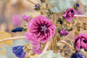 mauretanische malve , malva sylvestris mauritiana , malve , heilpflanze , nutzpflanze , wilde malve , dunkelrosa , gartenblume , blüte , blume , zierpflanze , lila , rosa , rot , violett , gartenpflanze , nahaufnahme , leuchtend , garten , lebendig , natur , bauerngarten ,