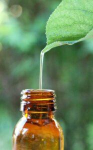 ätherisches öl , extrakt , pflanzen , natur , pflege , heilpflanzen , entspannung , Heilpflanzen, Heilkräuter, Naturheilkunde, Phytopharmaka
